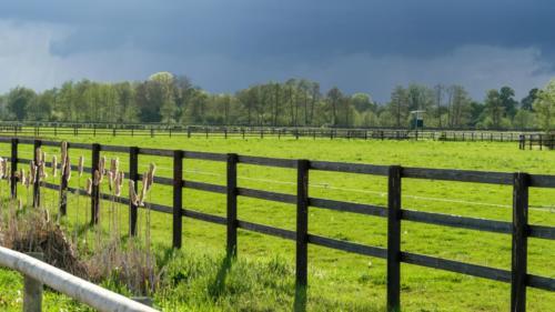 Haras de chevaux Pays d'Auge