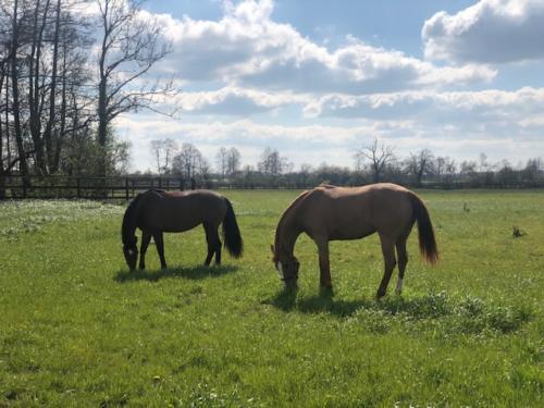 chevaux-pature