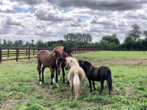 chevaux pre pontfol